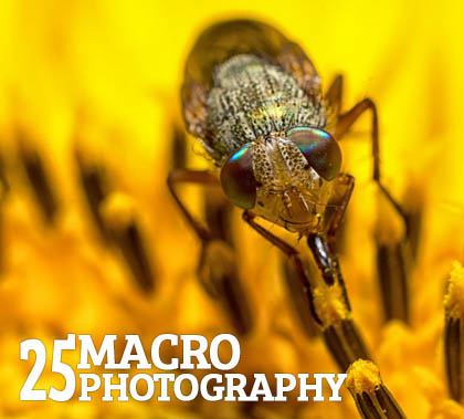 Fantastic Macro Photography – 25 Examples