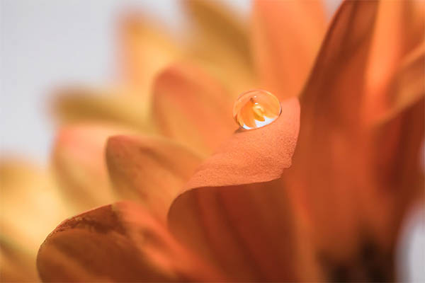 Beautiful Water Drops Photography - 12