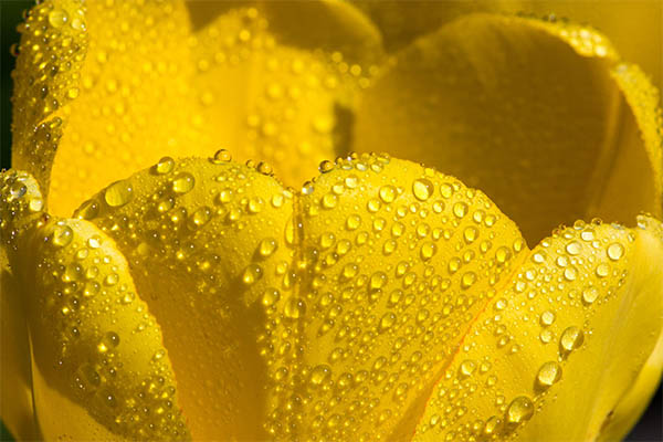 Beautiful Water Drops Photography - 20