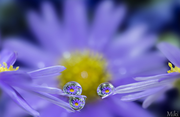 Water Drop Photography - 5