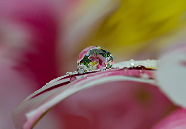 Water Drop Photography - 7