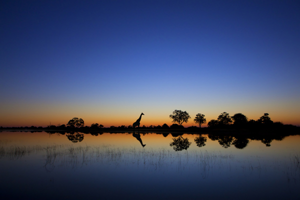 Okavango, Wonderful Photo taken at perfect time