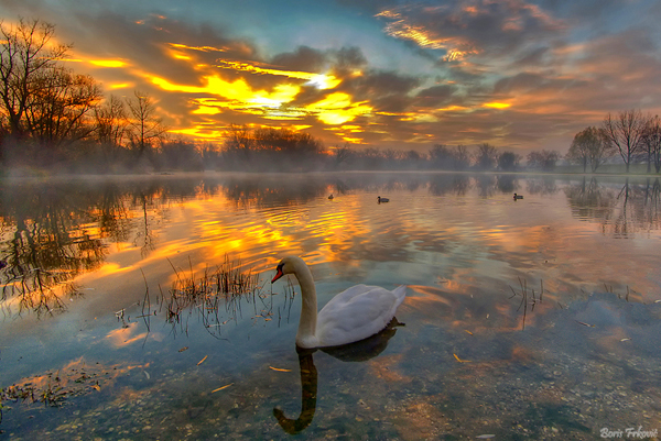 Swan Lake Stunning capture!