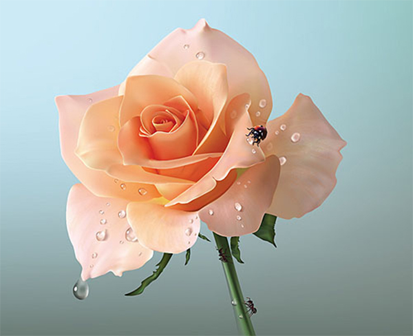 How to Creat Realistic Vector Rose in Adobe Illustrator