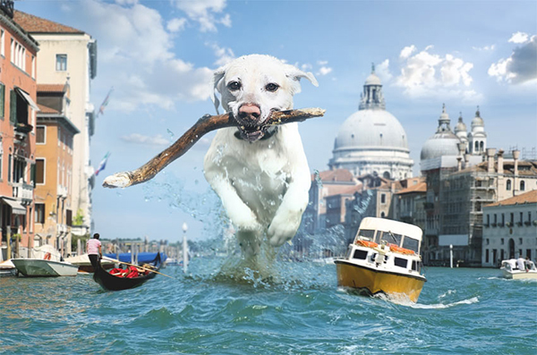 How to Create a Fun Giant Dog Photo Manipulation in Photoshop