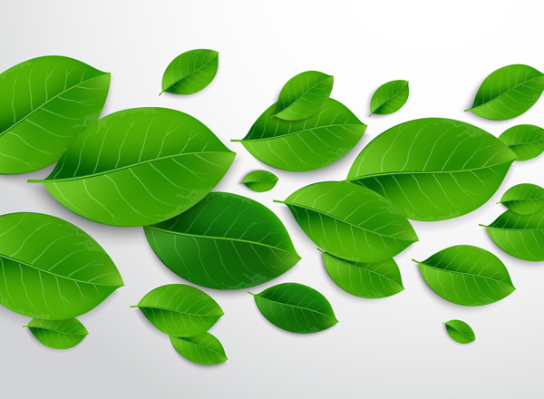 Learn How to Create a Universal and Realistic Green Leaf Vector using Adobe Illustrator