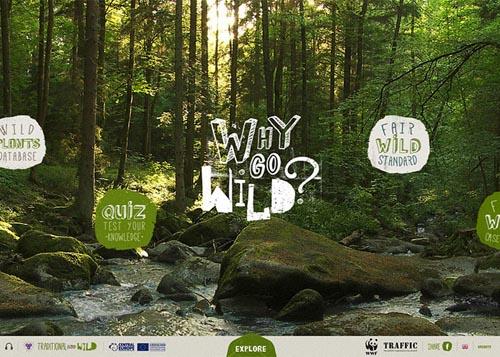 Why Go Wild