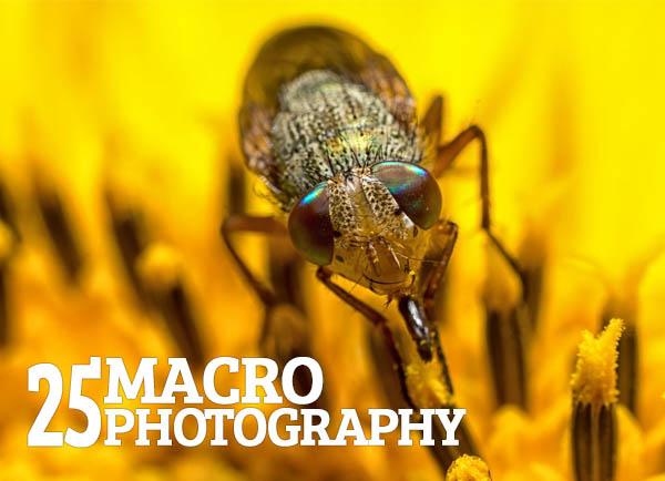 Fantastic Macro Photography - 25 Examples