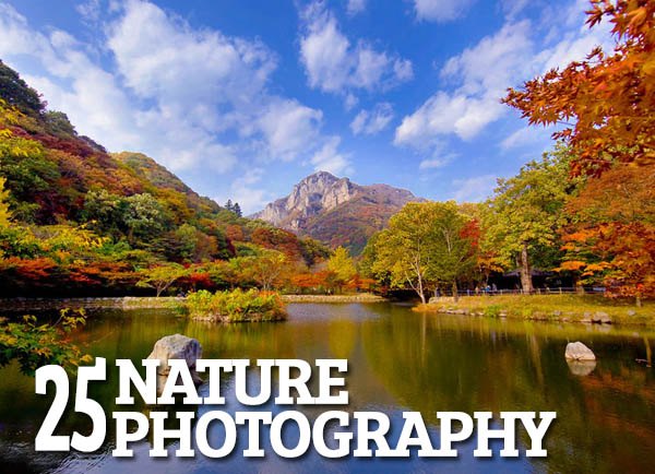 Fresh Nature Photography – 25 Exapmles