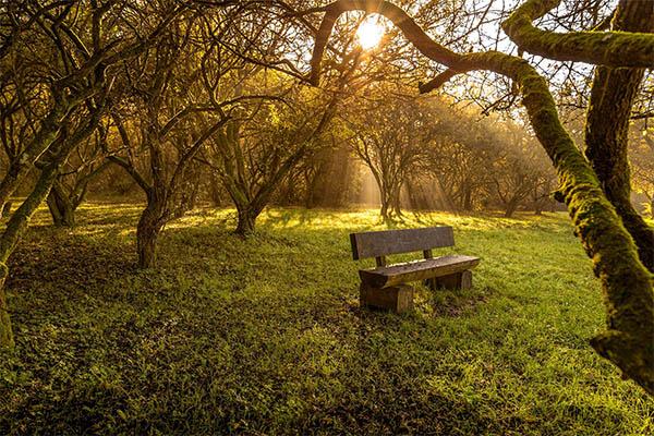 Fresh Nature photography - 8