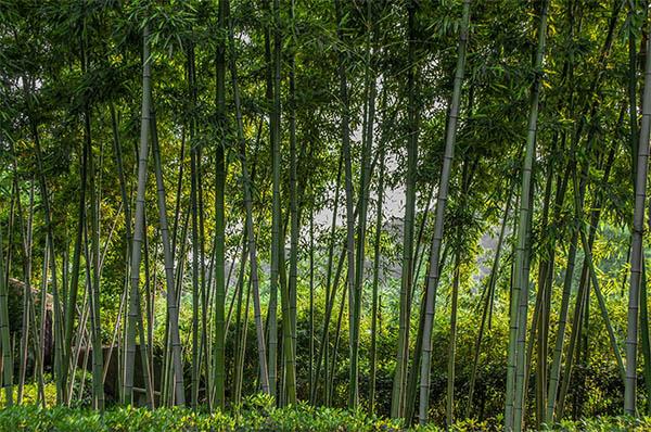 Fresh Nature photography - 15