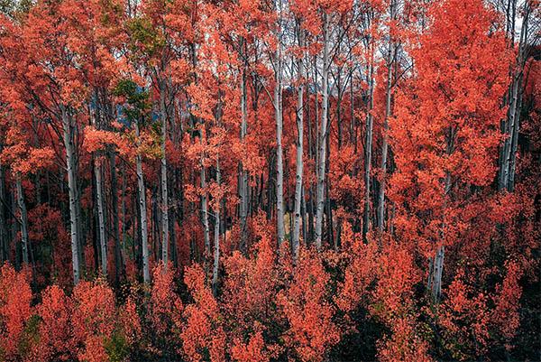 Fresh Nature photography - 25