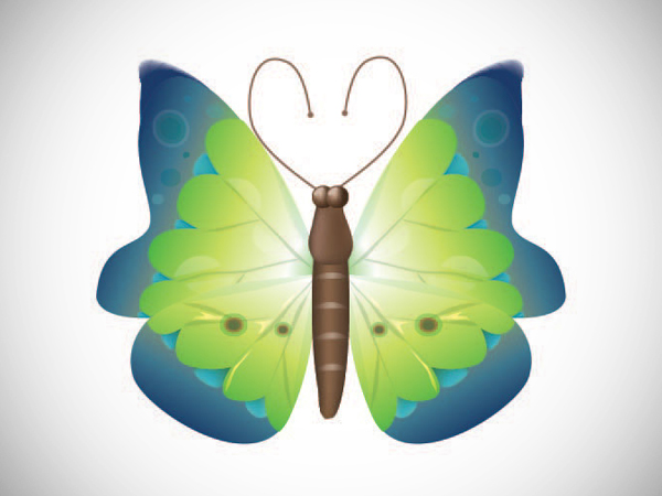 How to Creat Butterfly in Adobe Illustrato