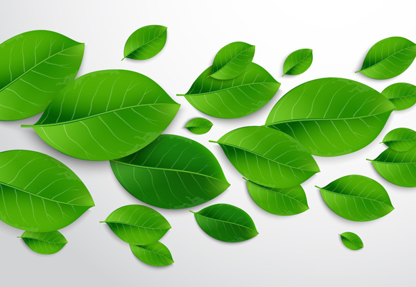 How to Create a Universal and Realistic Green Leaf Vector using Adobe Illustrator