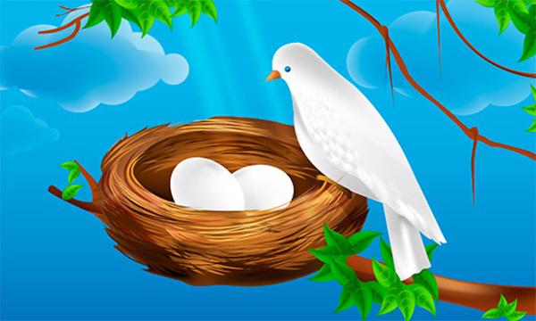 How to Create Bird Nest