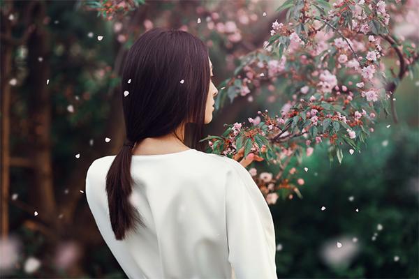 How to Create a Sakura Petals Brush in Photoshop